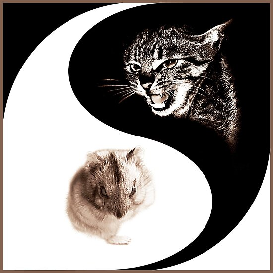 Yin Yang by fenist