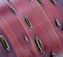peau de bronze by yvesrossetti