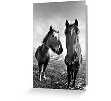 Horse's stare Greeting Card