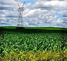 In the cornfield by Michi Fana