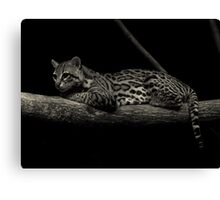 Predator of the Night (Ocelot) Canvas Print