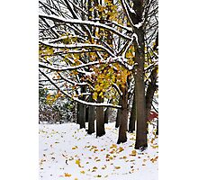 Colour in the snow Photographic Print