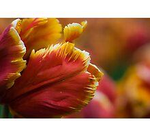 Petals of Fire Photographic Print
