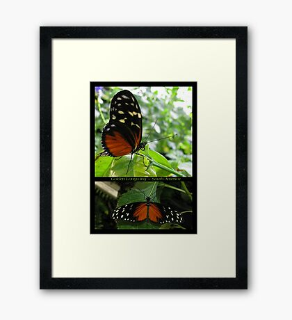 Butterfly (South America) ~ Golden Longwing Framed Print