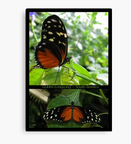Butterfly (South America) ~ Golden Longwing Canvas Print