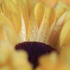Lemon Drop by Shelley Neff