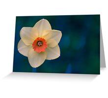 Morning Daffodil  Greeting Card