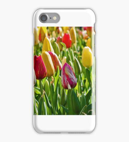 Bowral Tulips iPhone Case/Skin