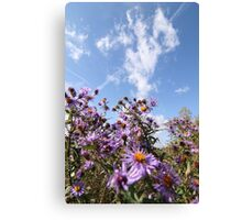 Pink flowers against a blue sky  Canvas Print