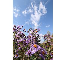 Pink flowers against a blue sky  Photographic Print