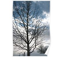 Leafless tree against a cold winter sky Poster