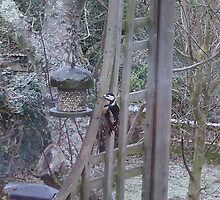 woodpecker by brucemlong