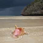 Bahama Conch by Leon Heyns