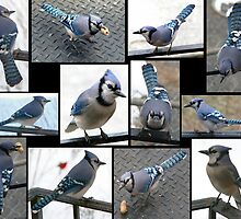 Jazzy Blue Jays by WalnutHill