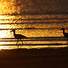 Beach Stone-curlews at Sunset by naturalnomad