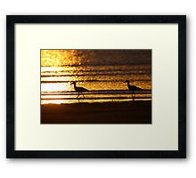 Beach Stone-curlews at Sunset Framed Print