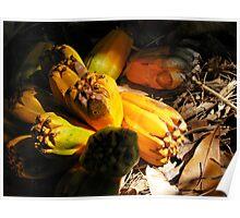 fallen pandanus fruit Poster