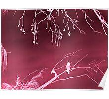 winterbird Poster
