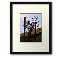 Barbe Wire Roses Framed Print