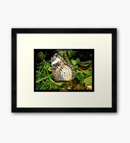 Butterfly (Australia) ~ Orange Lacewing Framed Print