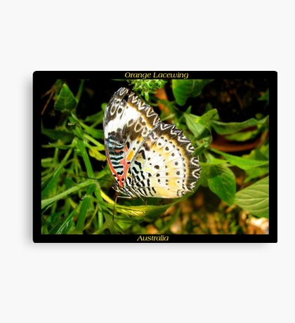 Butterfly (Australia) ~ Orange Lacewing Canvas Print