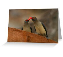Red-billed Oxpeckers Greeting Card