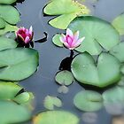 A flower in a wirl of lily pads..Sendai, Japan by Heather Butler