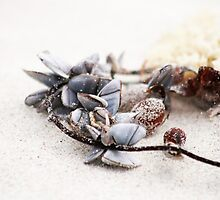 Shell Necklace by Stephen Mitchell