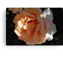 Perfectly Peach Canvas Print