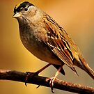 SPARROW BEAUTY~ by RoseMarie747