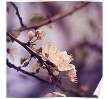 Soft side of Spring I Poster