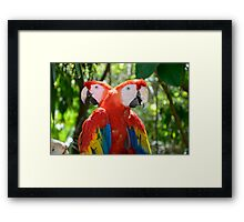 Pair of Rainbow Coloured Forest Scarlet Macaw Parrots Framed Print