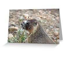Rocky Mountain Marmot Greeting Card