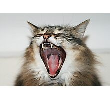 Hear Me Roar Photographic Print
