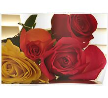 Four Colors of Roses, As Is Poster