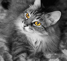 Cats Eyes by Stephen Mitchell