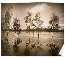 River Gums Poster