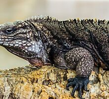 This Is My Good Side by John Velocci
