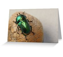 Iridescent Green Christmas Beetle Greeting Card