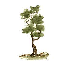 Little Zen Tree 139 Photographic Print