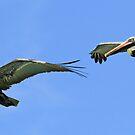 Synchronized pelicans in flight! by jozi1