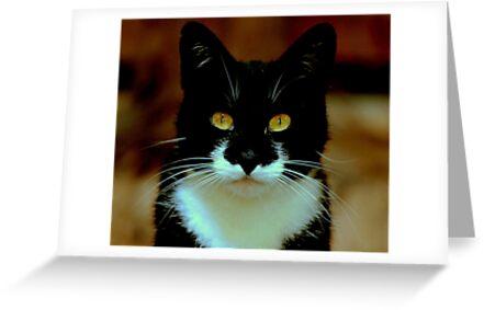 Black pussy cat, white bib beautiful eyes, seeks owl for pea pod voyage by Alan Mattison