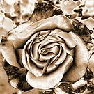 Sepia Rose by HEIDI  HORVATH