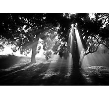 Aura of a Winters' Morning Photographic Print