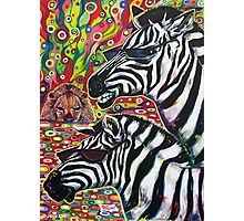 'Zebra Cool' Photographic Print