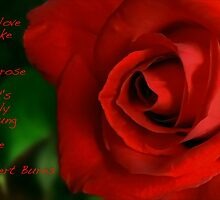 A Red, Red Rose, My Love Is Like by paintingsheep