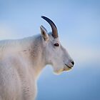 Mt Goat Portrait by kurtbowmanphoto