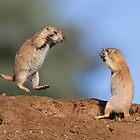 Kung Fu Prairie Dogs 2 by kurtbowmanphoto