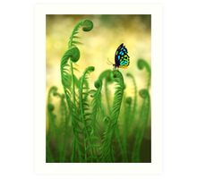 Schmetterling Art Print