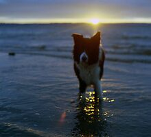 Indy At the Sunset  by Michael Haslam